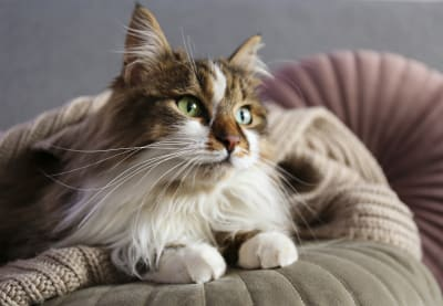 Best House Cats for Allergies, Greensboro Vet