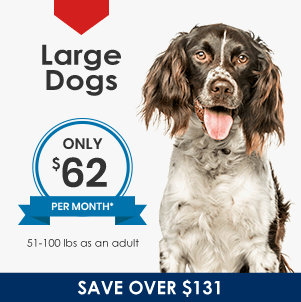 Plans for Large Dogs
