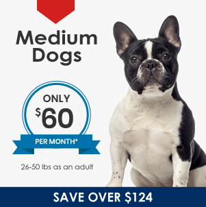 Plans for Medium Dogs