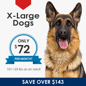 Plans for XLarge Dogs